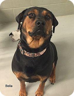 Rottweiler Mix Dog for adoption in Hibbing, Minnesota - Bella