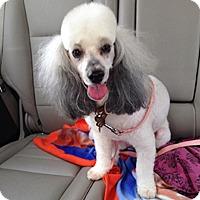 Adopt A Pet :: MADELINE - Melbourne, FL