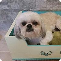 Adopt A Pet :: Jasper - Brea, CA