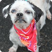 Adopt A Pet :: JIMMY - Clayton, NJ
