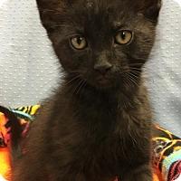 Adopt A Pet :: Astro - Greenville, IL