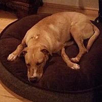 Adopt A Pet :: Lily - Decatur, GA