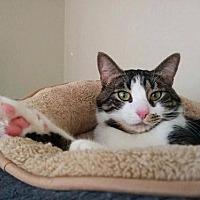 Adopt A Pet :: Sam - San Francisco, CA
