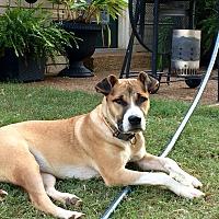 Adopt A Pet :: SHILOH - Nashville, TN