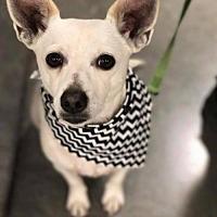 Adopt A Pet :: Cain - Tucson, AZ