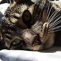 Adopt A Pet :: Fergus - Duncan, BC