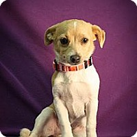 Adopt A Pet :: OMG - Broomfield, CO