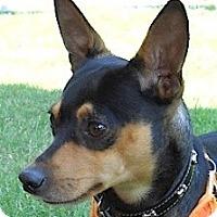 Adopt A Pet :: Ricky - Kingwood, TX