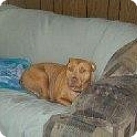 Adopt A Pet :: Gidget - Alliance, NE
