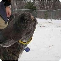 Adopt A Pet :: Sassy (Sassy Self) - Chagrin Falls, OH