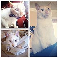 Adopt A Pet :: Junior (aka Simba) - Sunrise, FL