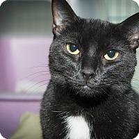Adopt A Pet :: Sarah - New York, NY