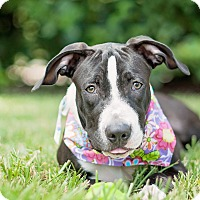 Adopt A Pet :: Abra - Kingwood, TX
