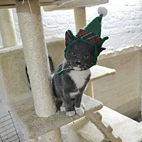 Adopt A Pet :: Brewsky - Brooklyn, NY