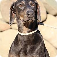 Adopt A Pet :: Grover - Fillmore, CA