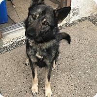 Adopt A Pet :: RIDLEY - Cadiz, OH