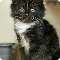 Adopt A Pet :: Wrigley - Troy, MI
