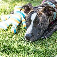 Adopt A Pet :: Petunia-ADOPT Me! - Redondo Beach, CA