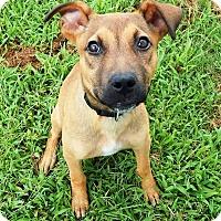 Adopt A Pet :: Josie - Terrell, TX