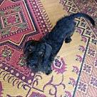 Adopt A Pet :: Jester