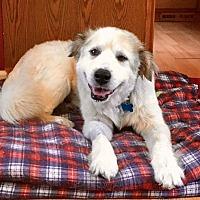 Adopt A Pet :: Candy - Plainfield, IL