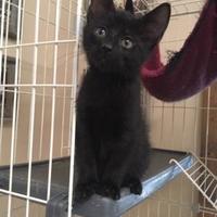 Adopt A Pet :: Porky - Cashiers, NC