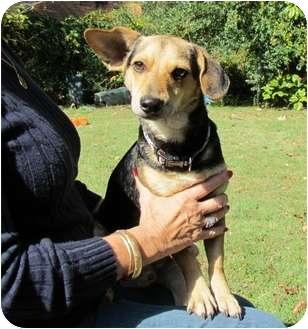 Shepherd (Unknown Type)/Dachshund Mix Dog for adoption in Paintsville, Kentucky - Rocky