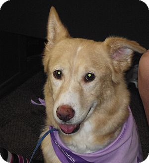Husky Mix Dog for adoption in Birmingham, Alabama - Mandy