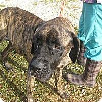 Adopt A Pet :: Harmony (AL) - Asheboro, NC