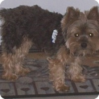 Adopt A Pet :: Buddy - N. Fort Myers, FL