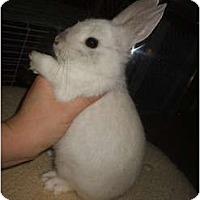 Adopt A Pet :: Spot - Tamarac, FL