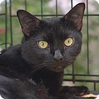 Adopt A Pet :: Agent ZigZag - Brooklyn, NY