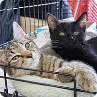 Adopt A Pet :: Hope - Merrifield, VA