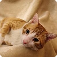 Adopt A Pet :: Edgar - Foothill Ranch, CA
