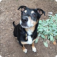 Adopt A Pet :: Mac -Courtesy List - Richmond, VA