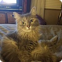 Adopt A Pet :: Grace - Columbus, OH
