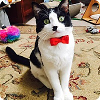 Adopt A Pet :: Waylon - Chicago, IL