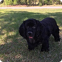 Adopt A Pet :: Sophie - Southern Pines, NC