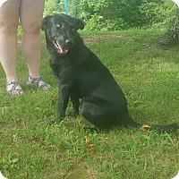 Adopt A Pet :: Pepper *cat friendly*meet me~ - Glastonbury, CT