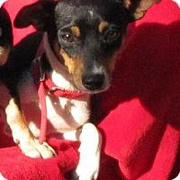 Adopt A Pet :: Sid - Springfield, VA