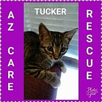 Adopt A Pet :: Tucker - San Tan Valley, AZ