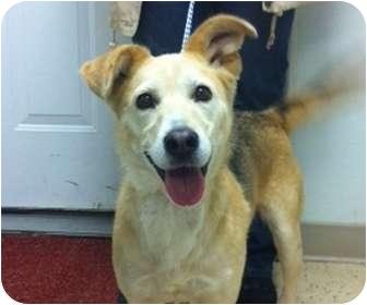Beagle/Fox Terrier (Smooth) Mix Dog for adoption in Northville, Michigan - Josie