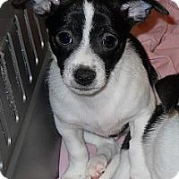 Adopt A Pet :: Curly Bill - Oklahoma City, OK
