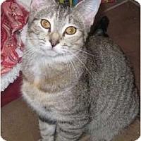 Adopt A Pet :: Caramel - PENDING - Warren, OH
