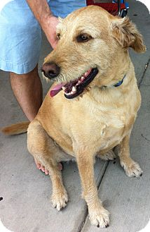 Labradoodle Mix Dog for adoption in Tracy, California - Cooper-Owner Assist