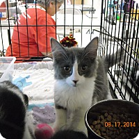 Adopt A Pet :: Gracie - Riverside, RI