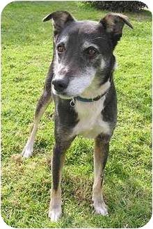 Border Collie Mix Dog for adoption in Santa Barbara, California - Ricky
