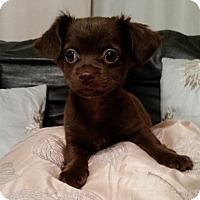 Adopt A Pet :: ELLA HOPE - Fort Worth, TX