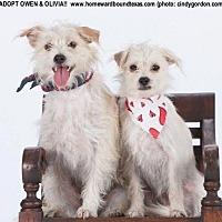 Adopt A Pet :: Owen - Southlake, TX