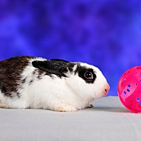 Adopt A Pet :: Ketura - Marietta, GA